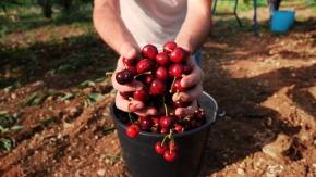 cotto di ciliegie 150g